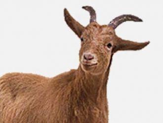 Gard electric capre
