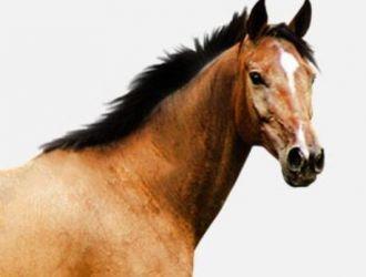 Gard electric pentru cai