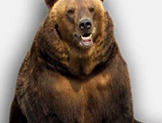 Gard electric ursi